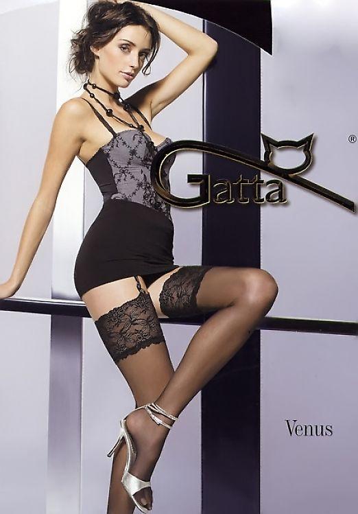 Gatta Venus