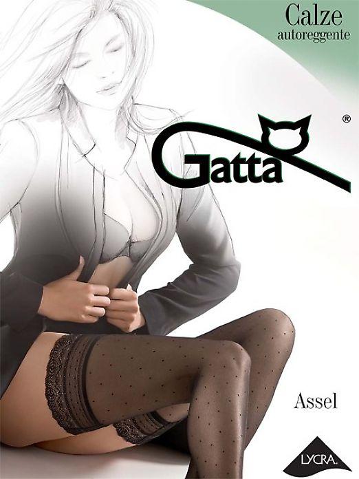 Gatta Assel 01